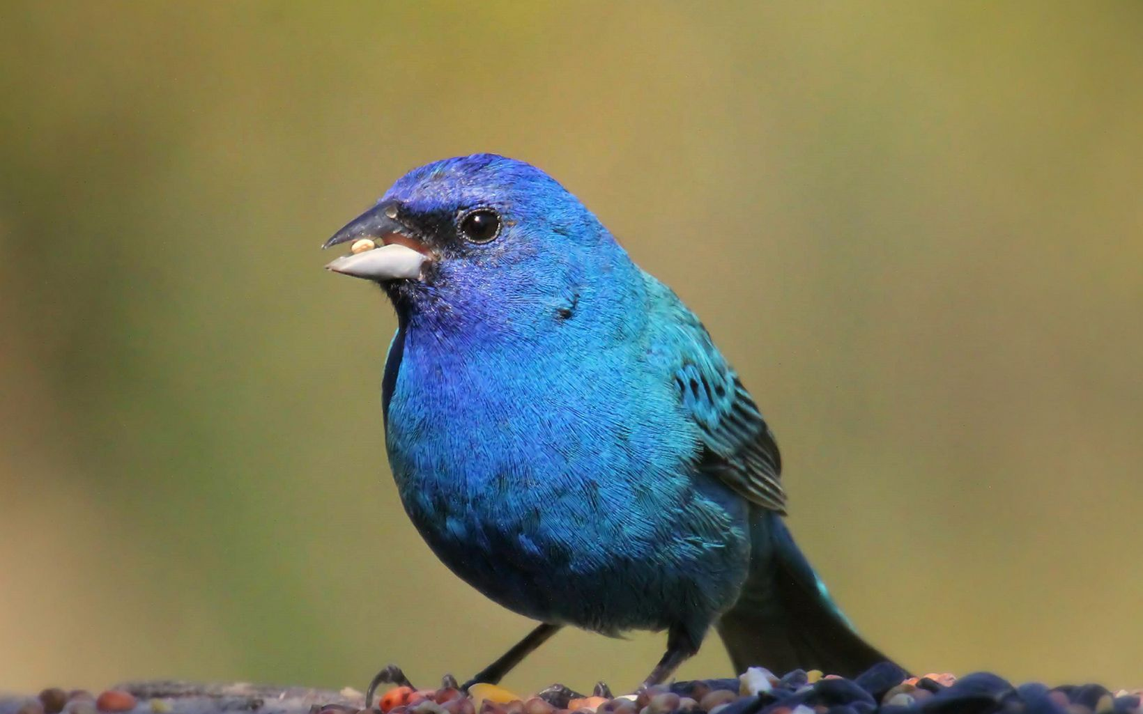 A bright blue bird rests on a branch.