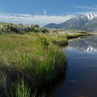 Carson River at River Fork Ranch near Genoa, NV