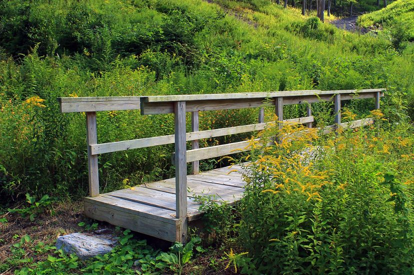 A wooden foot bridge disappears through a tall stand of flowering grasses.