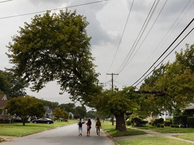 Louisville, Kentucky, on the corner of Schneider and Southgate. Homeowners do their best to keep large trees alive, but the challenges are many.