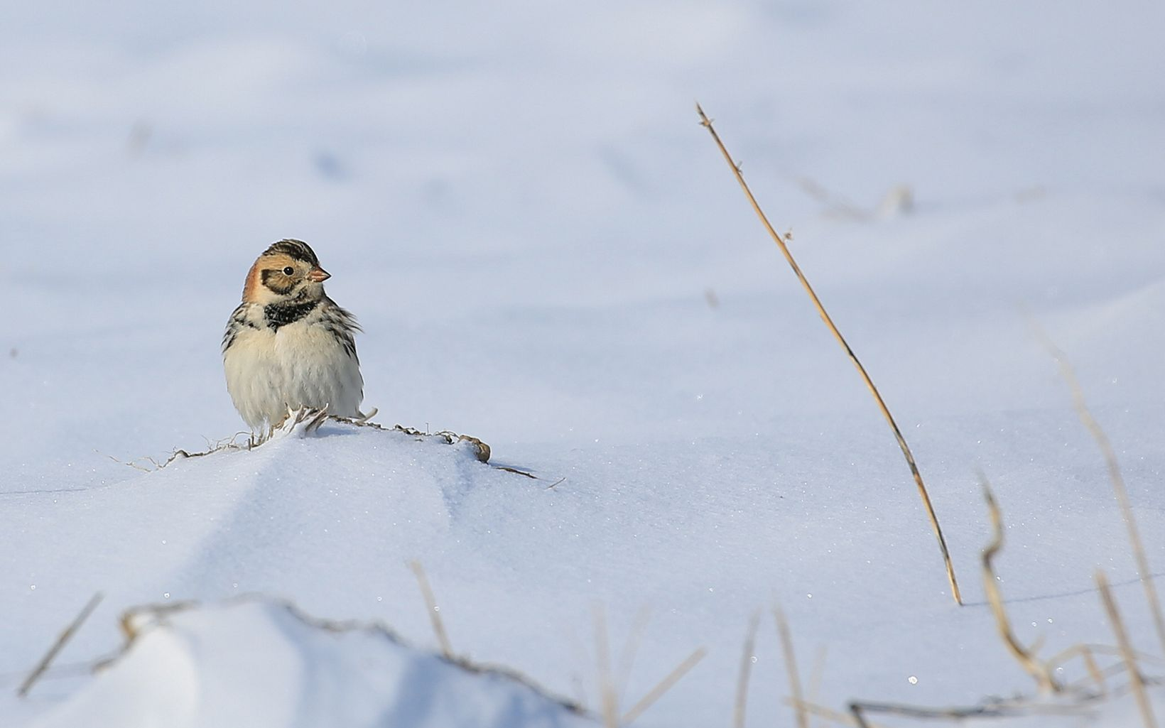 A small bird rests in a snowy landscape.