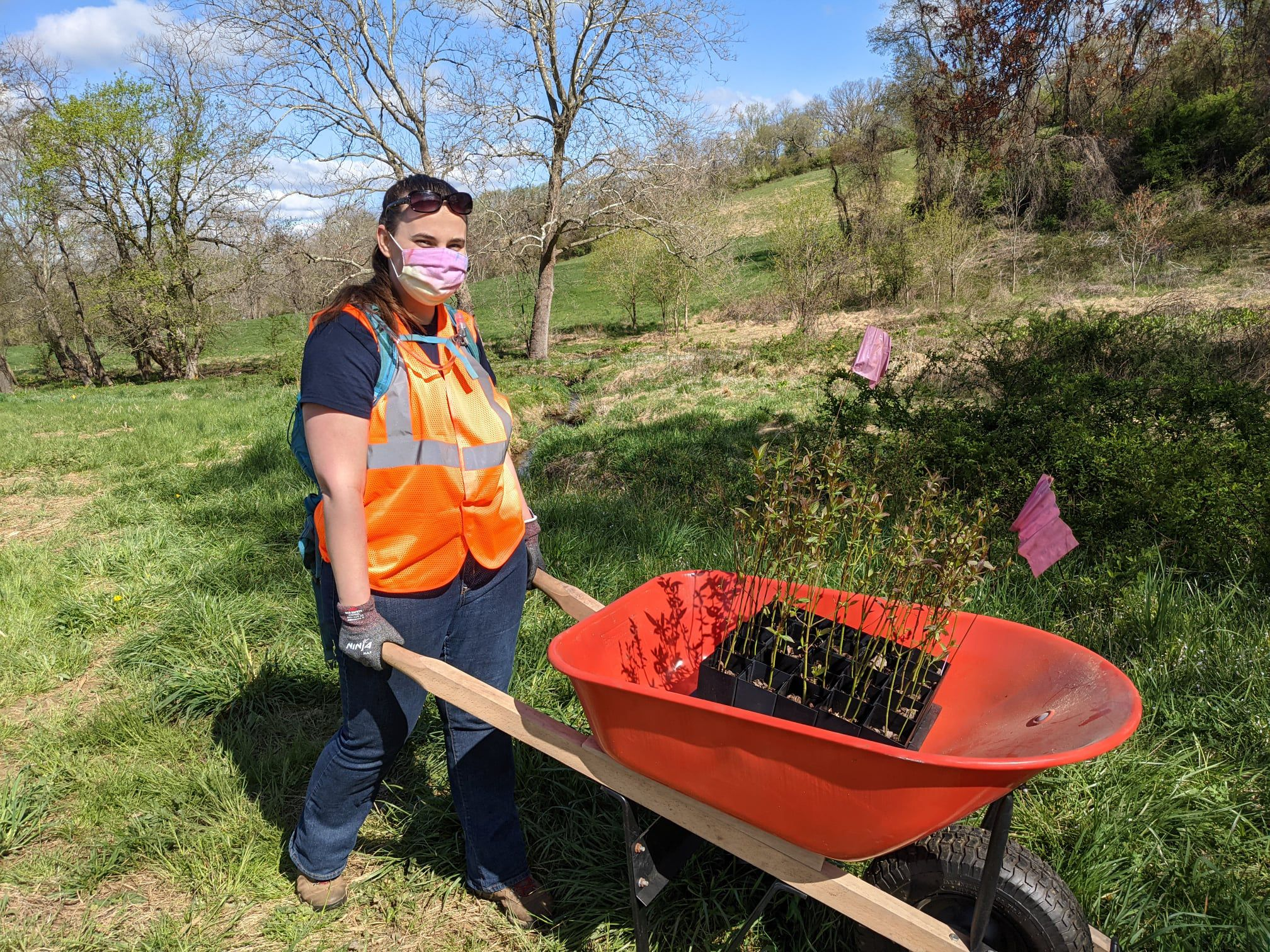 A woman wearing a pink face mask and an orange reflective safety vest poses holding the handles of an orange wheelbarrow. A black container holding a dozen small tree saplings rest in the barrow.