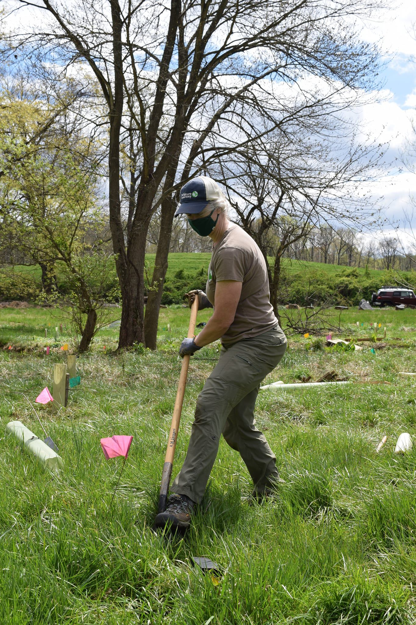 A woman wearing a black face mask uses a long handled shovel to dig a hole for a tree sapling in an open park during a volunteer work day.