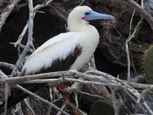 side view of a white bird with a blue beak in a tree