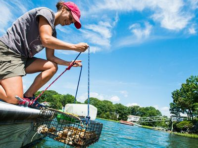 A woman kneeling on a dock and pulling up a cage full of oyster shells out of the water.