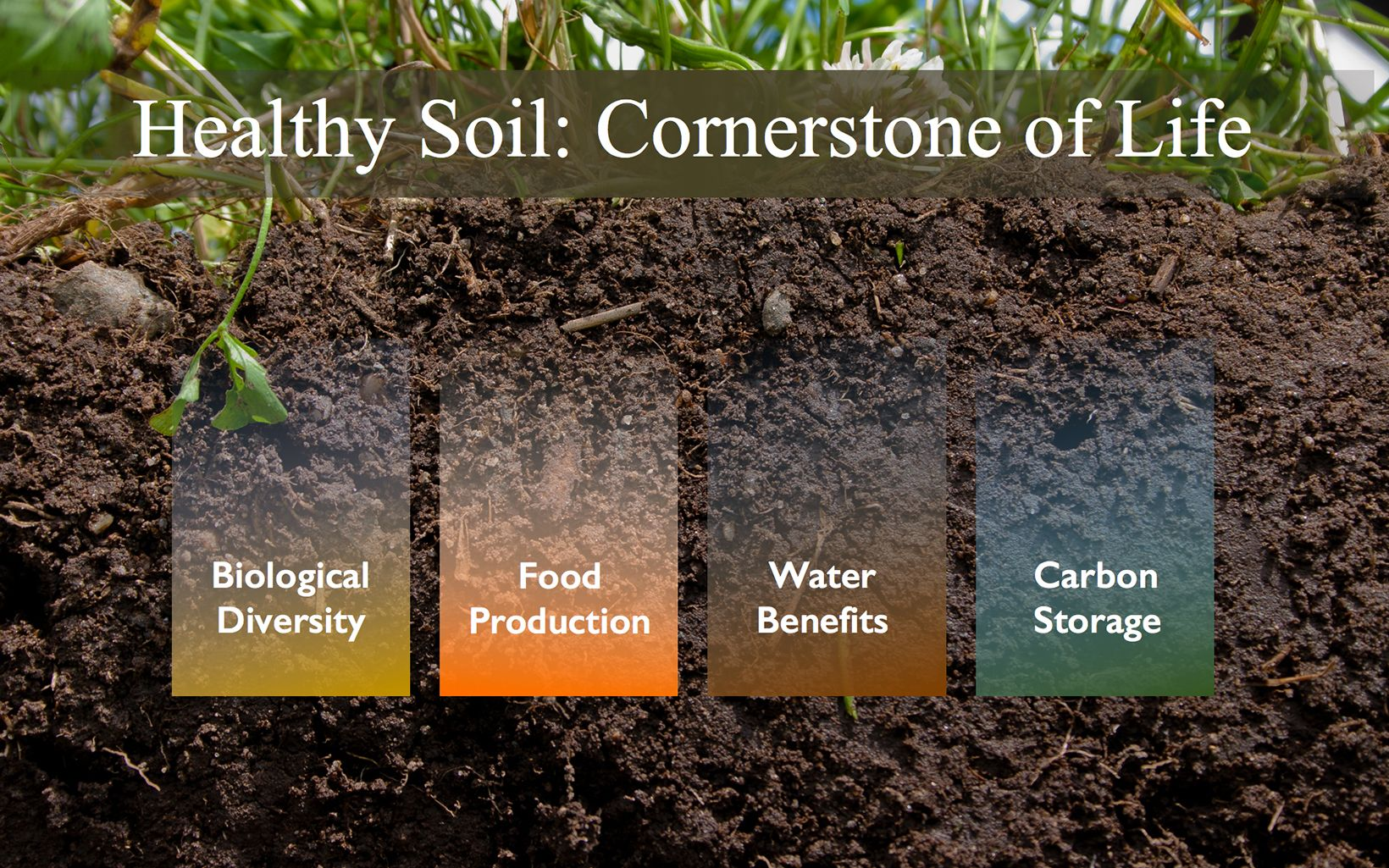 Infographic: reThink Soil Roadmap - Cornerstone of Life