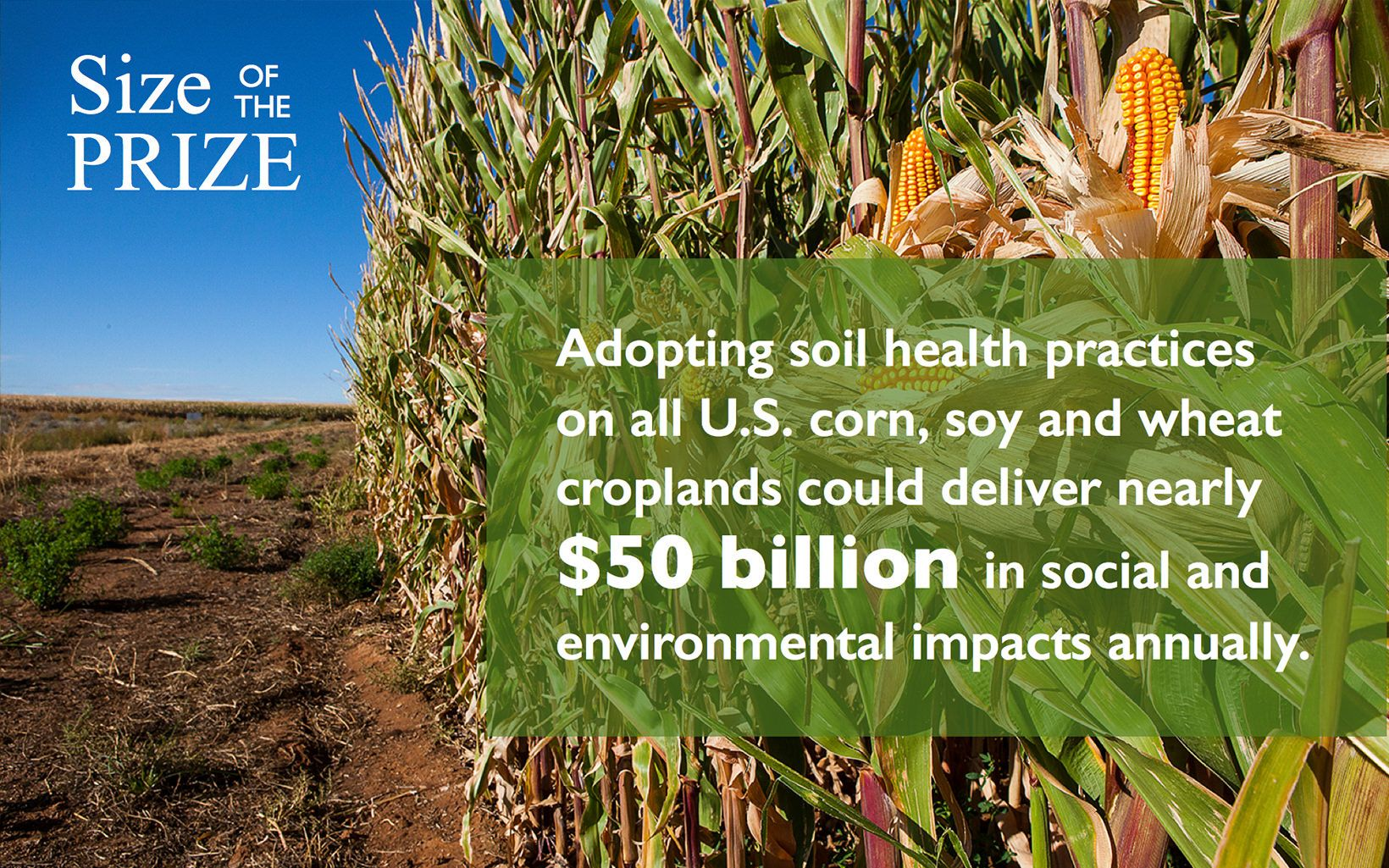 Infographic: reThink Soil Roadmap - Size of the Prize 2