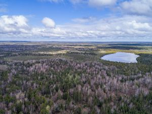 The Nature Conservancy is working with partners to identify climate-resilient sites for conifer restoration in Minnesota.