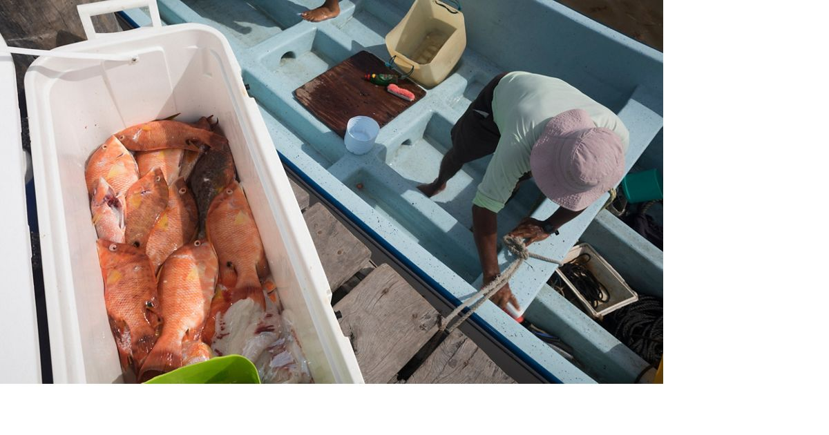 A man in a pink hat unloads a cooler full of orange fish from his blue boat..