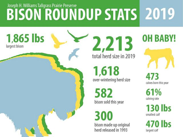 Statistics from the Tallgrass Prairie Preserve bison round-up in Oklahoma.