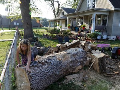 Robert Wilson and his daughter, Alaina, chop up the wood of an Ash tree in their yard. On average, American cities and towns are losing 4 million trees per year.