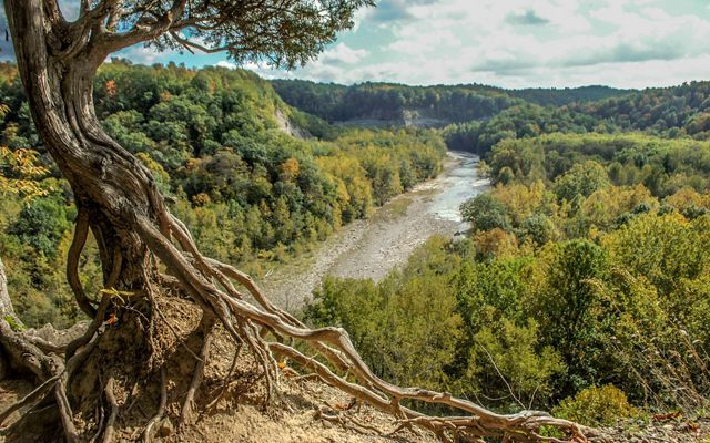 The roots of a brown tree across a dirt trail is in the foreground and a green-tree-lined valley with a river running through it is in the background.