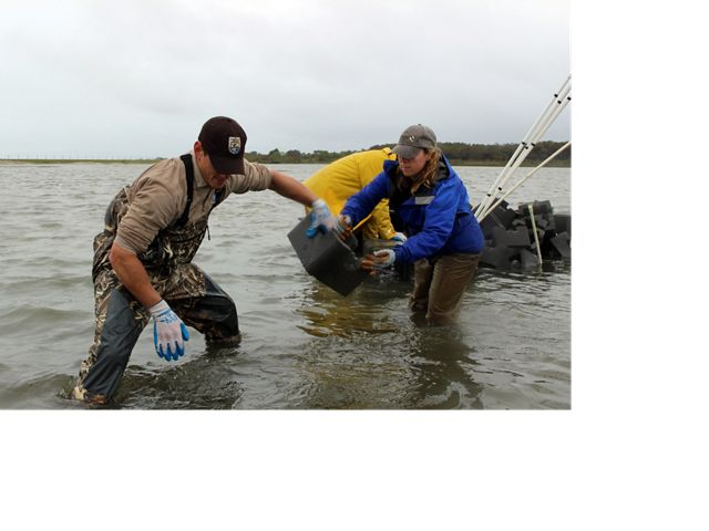 Using oyster castles to build new reefs at Tom's Cove, Chincoteague, VA.