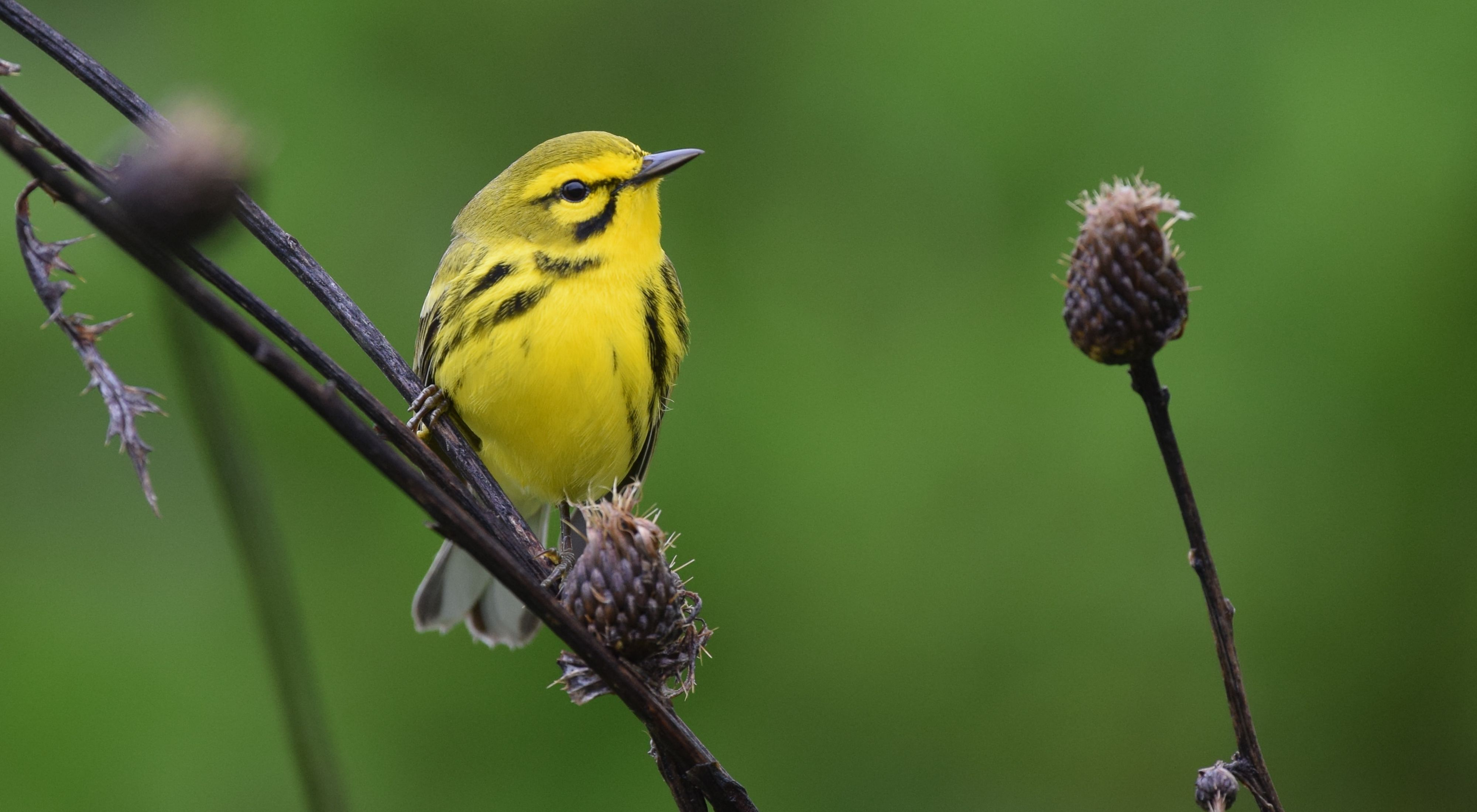 A small yellow bird rests on a branch.