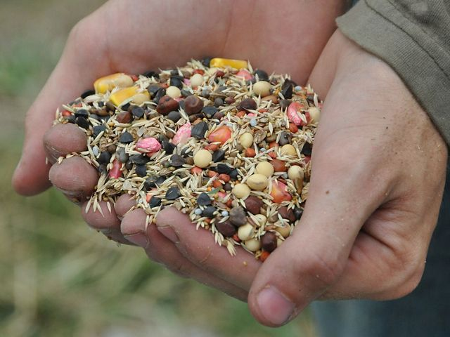 Two hands holding a colorful variety of seeds for cover crops.