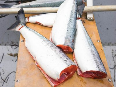 Fresh caught wild sockeye salmon