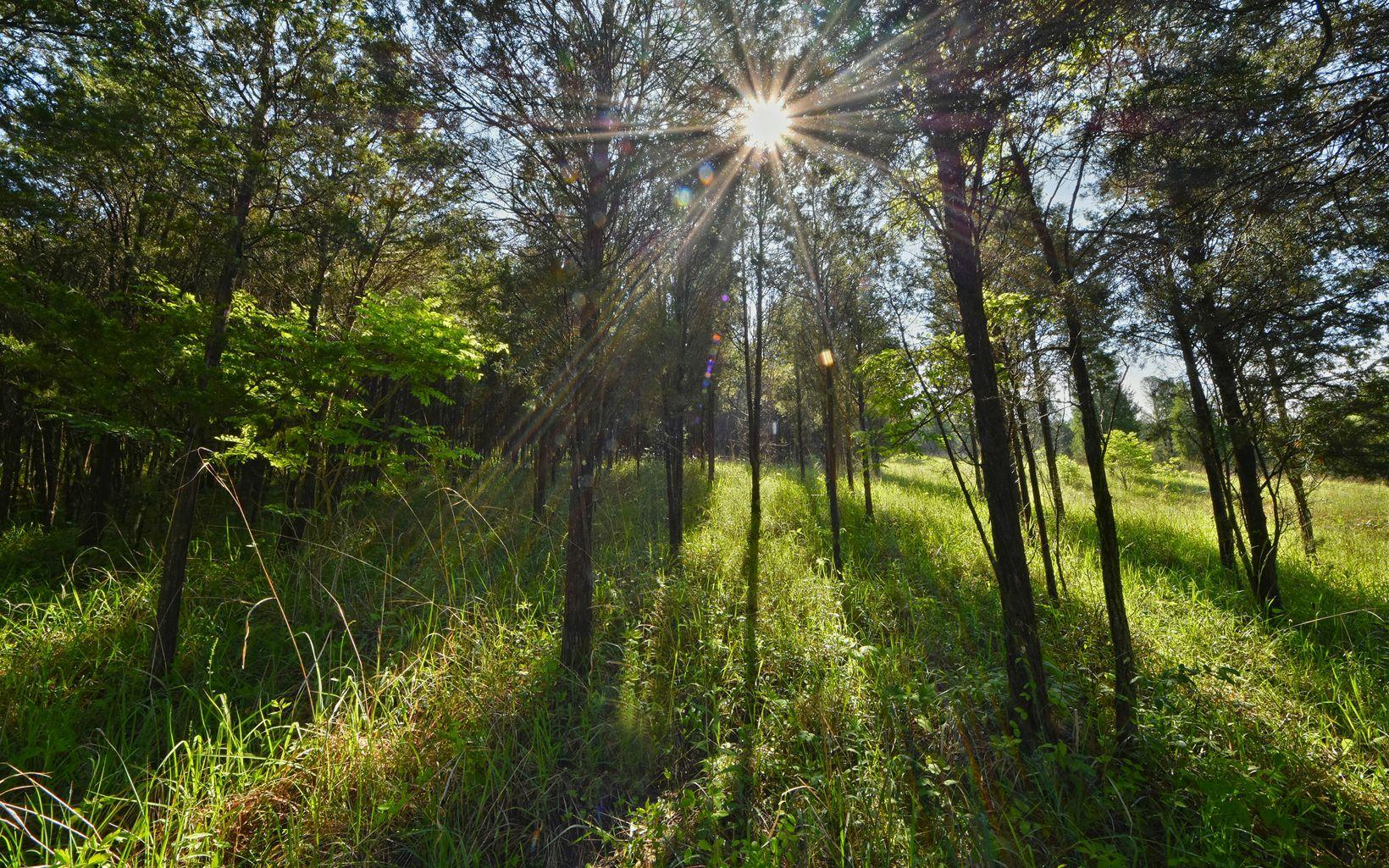 Picturesque view at the Joan Jones Portman Trail