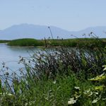 Grasses and flowers along a shoreline.