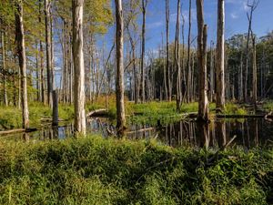 One of the wetlands at the Morgan Swamp Preserve