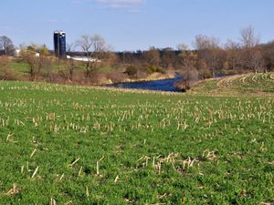 Field of corn cover crops and a silo in background.