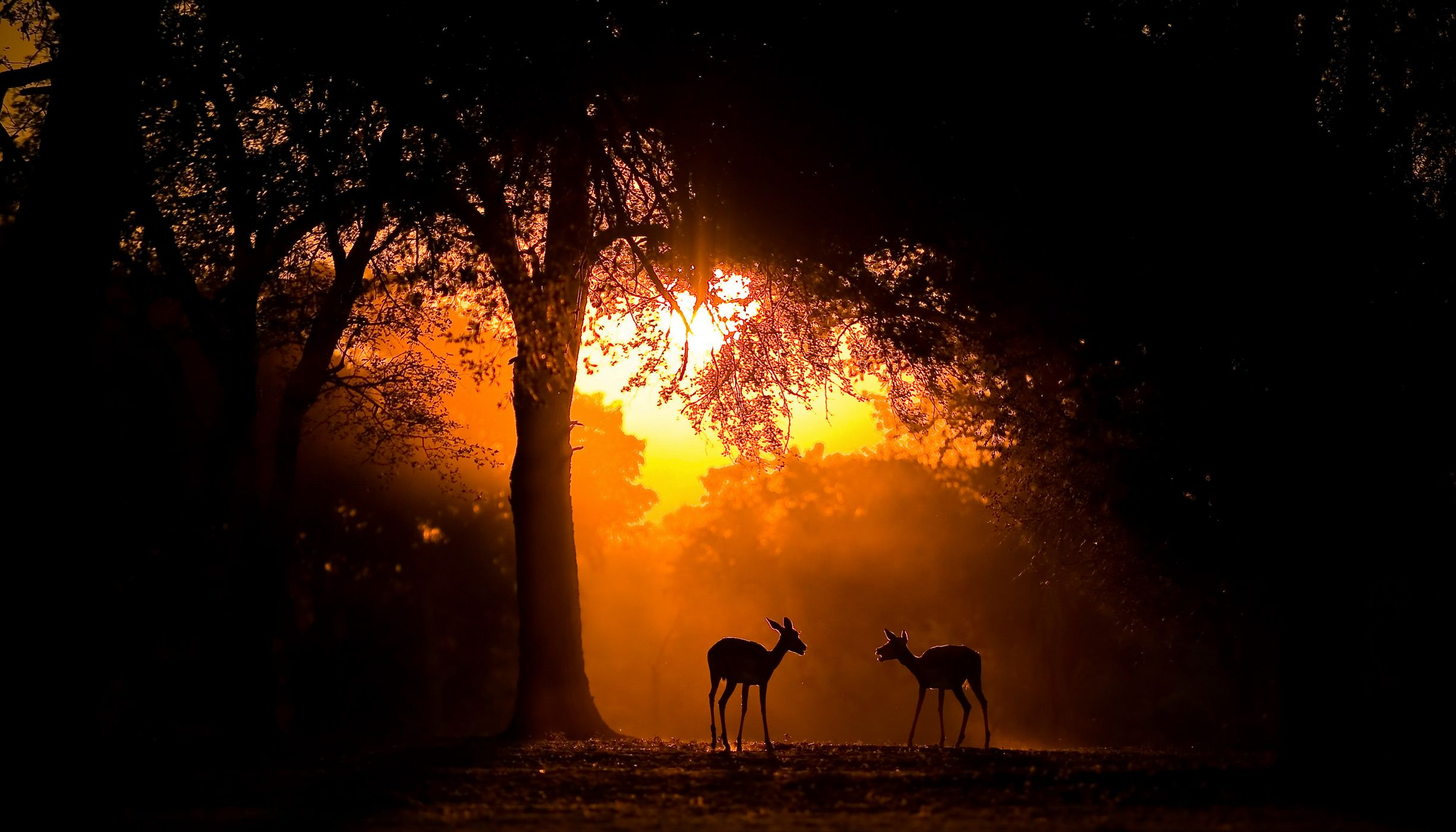 Impala in a clearing at sunset
