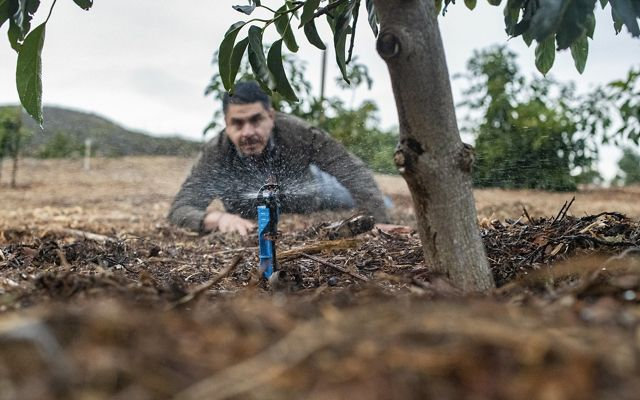 A farmworker on an avocado farm in Somis, CA.