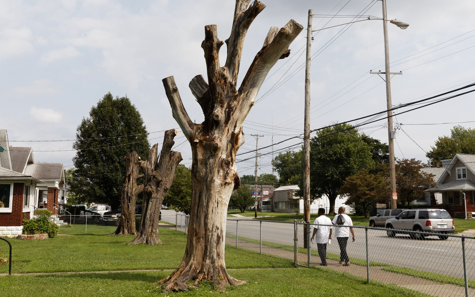 One of three dead trees on Beach Avenue in South Louisville. Storms, development and insect pests like emerald ash borer result in the loss of 150 trees per day in Louisville.