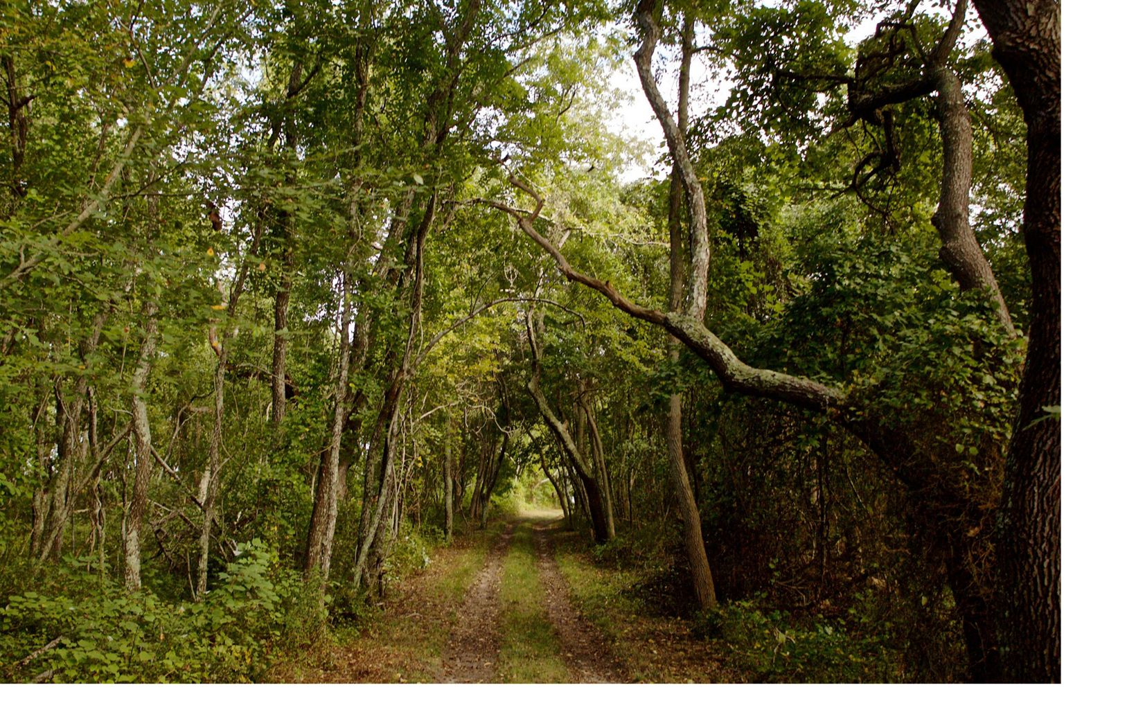 A path leads to more beauty on our Mashomack Preserve