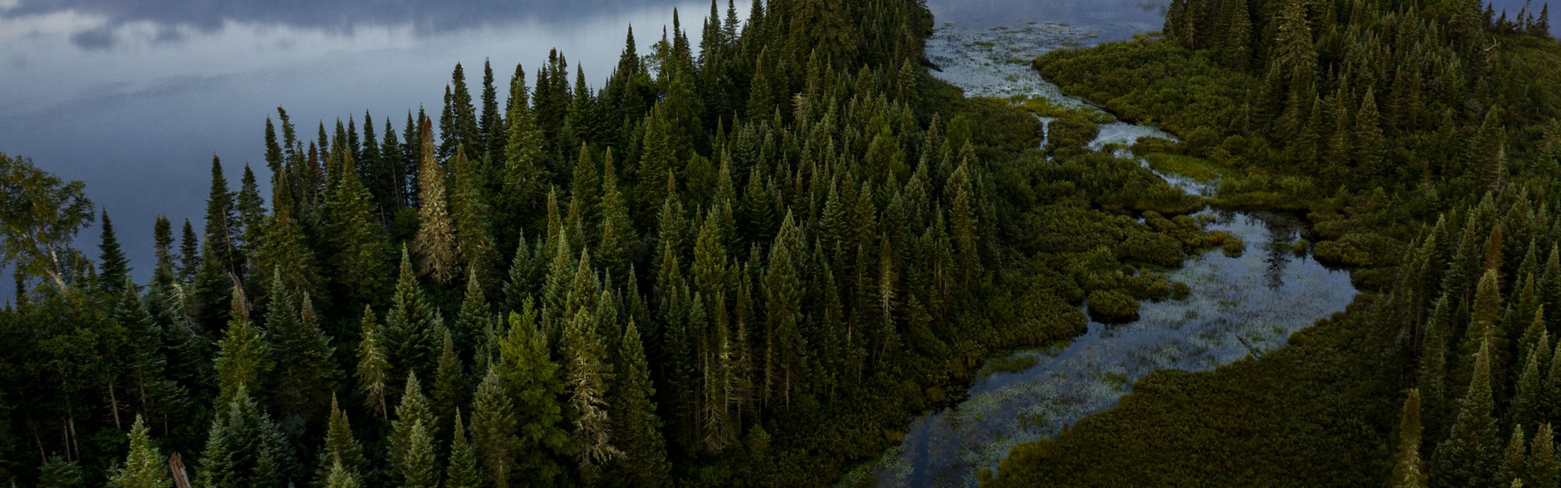 Aerial view of undeveloped woods and waters in northern Minnesota.