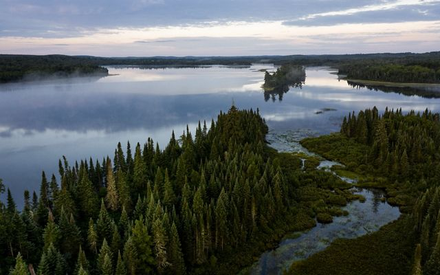 Birds-eye view of the towering trees and meandering waterways of the Superior National Forest in Minnesota providing climate resiliency and protections for people and nature.