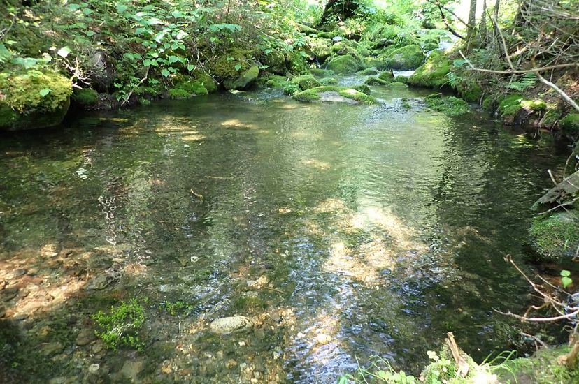 A small pool in a forest stream.
