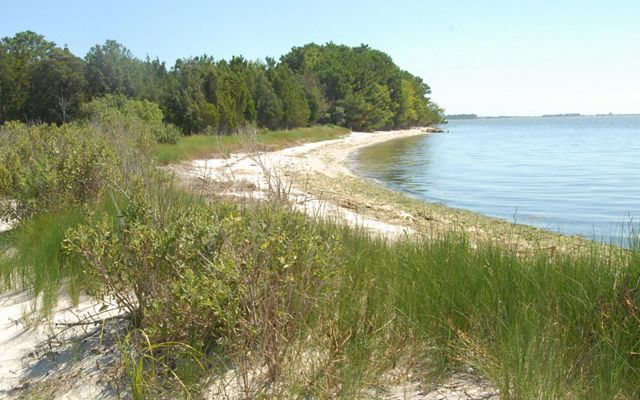 A wide sandy beach curves away into the distance ending at a point where tall trees meet the calm, still water.
