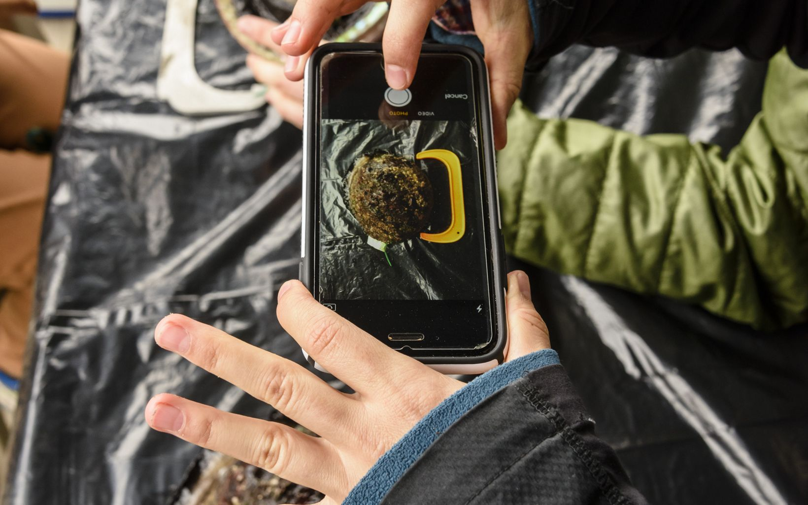 Hands holding a smartphone to photograph something brown and fuzzy that is showing through a hole in a black garbage bag.