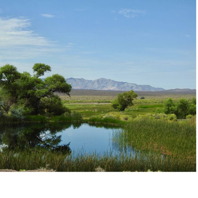 Wetland at 7J Ranch in Nevada