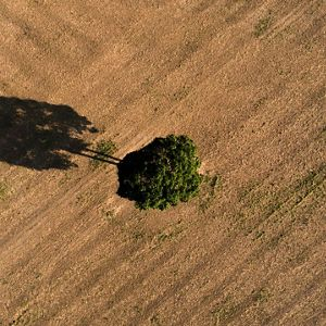 Using Remote Sensing to Advance Conservation Management