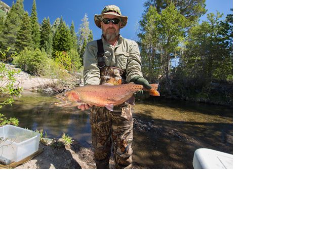Lahontan cutthroat trout researcher