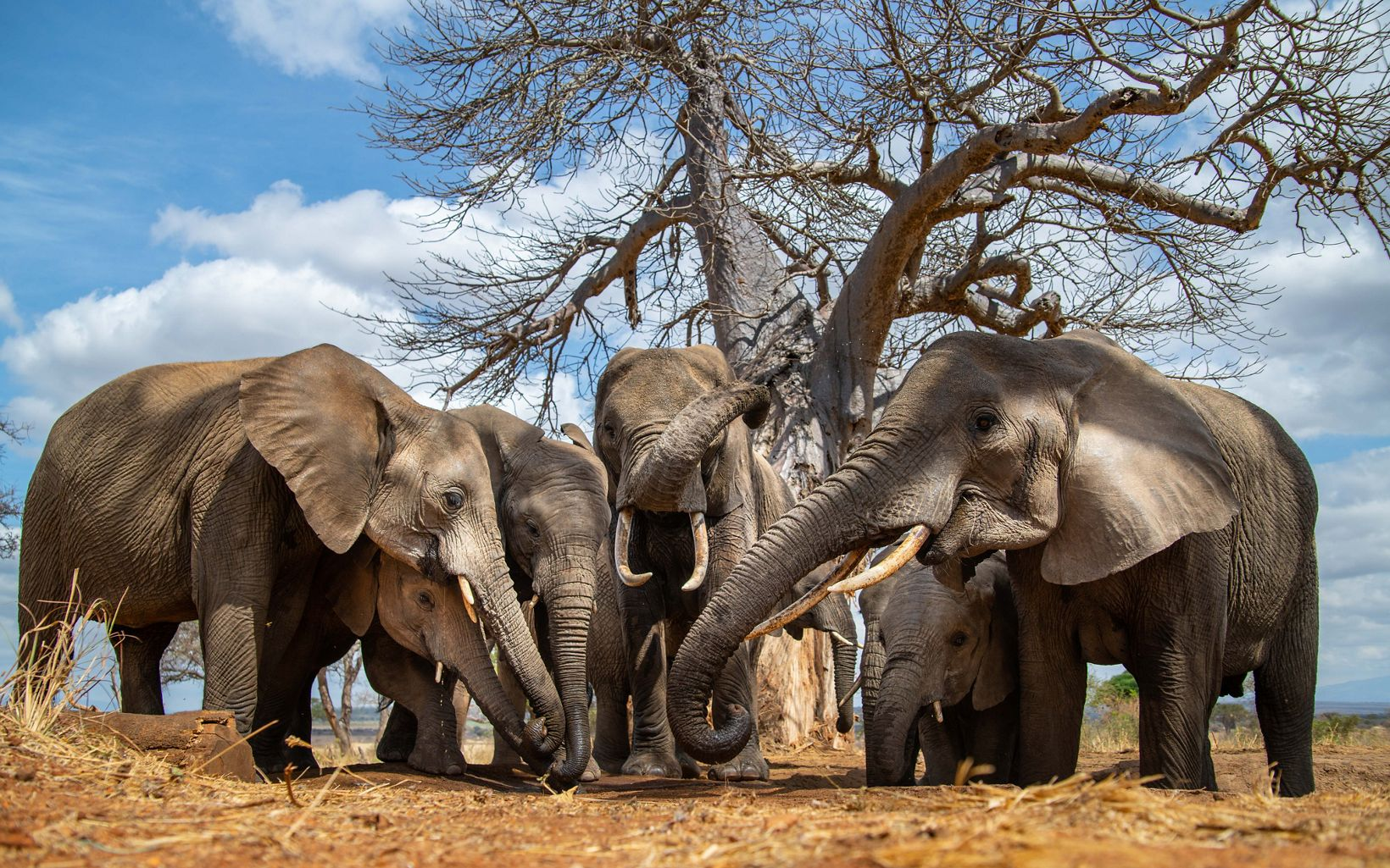 herd of elephants from a ground level point of view