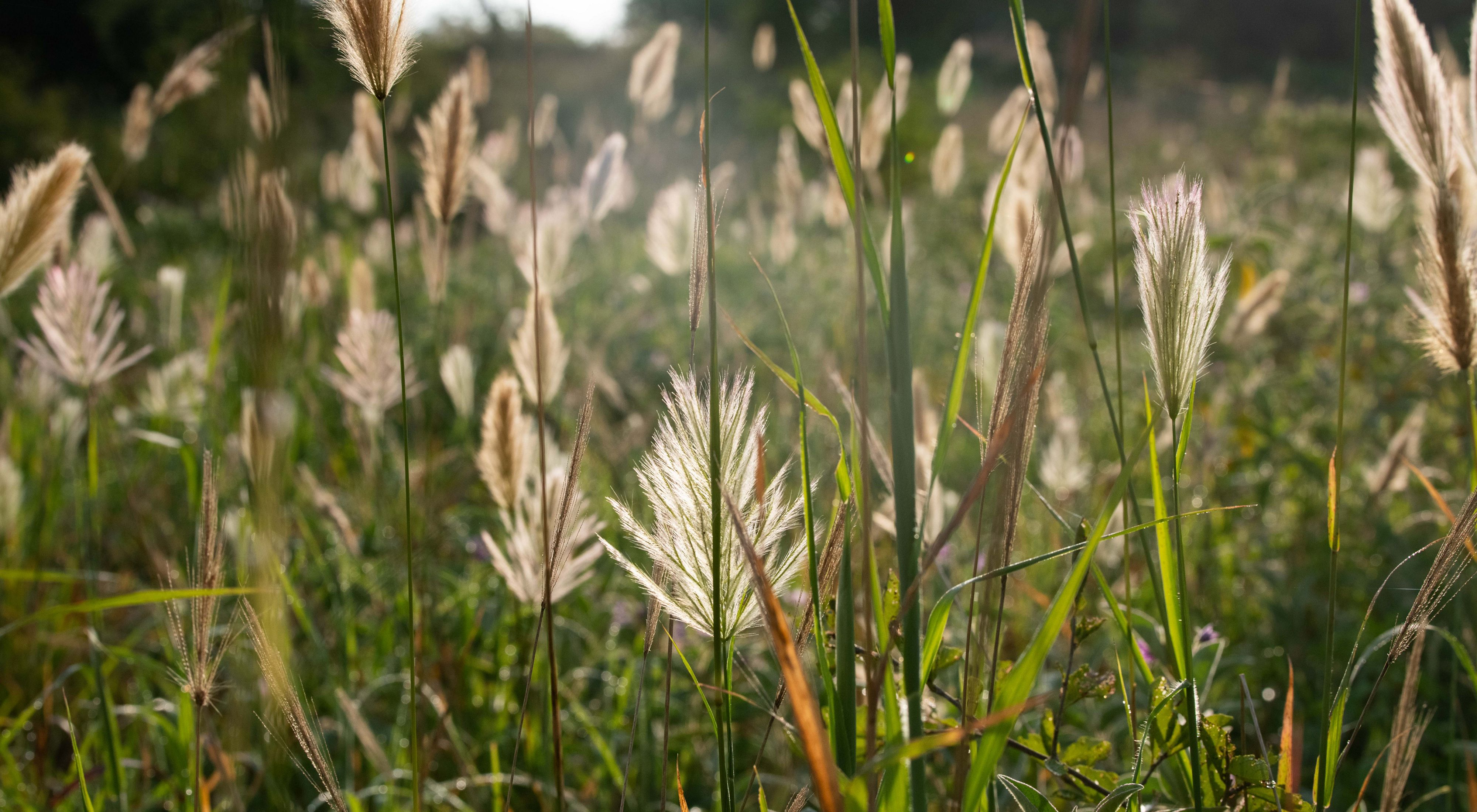 grass growing in the sunlight