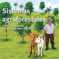 Presentan la importancia de la agroforestería y recogen los principales arreglos agrosilviculturales y silvopastoriles que se implementaron
