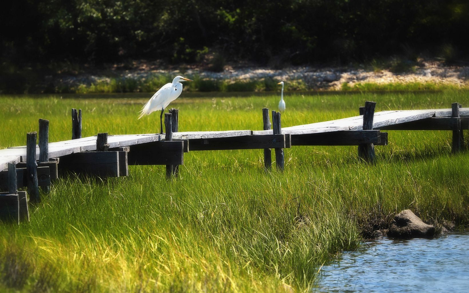 Two large white cranes on a wooden pier over marsh grasses.