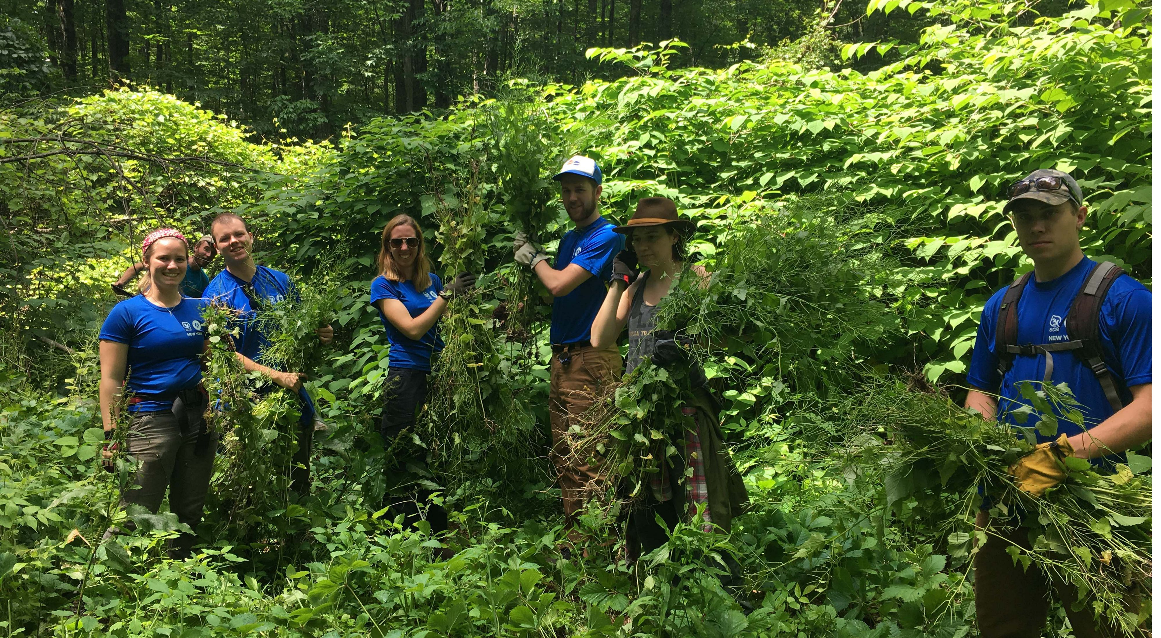invasive plant management