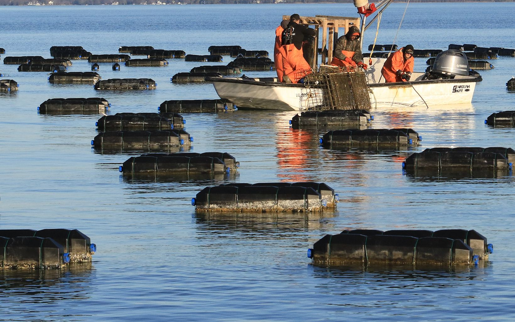 The Aquaculture Opportunity