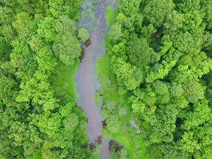 An aerial photo from a drone of forested wetlands in th