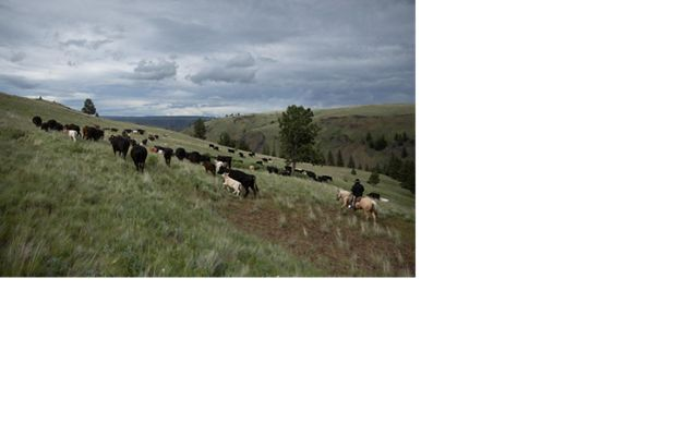 Ranchers at work on the Zumwalt Prairie Preserve in Wallowa County, Oregon.