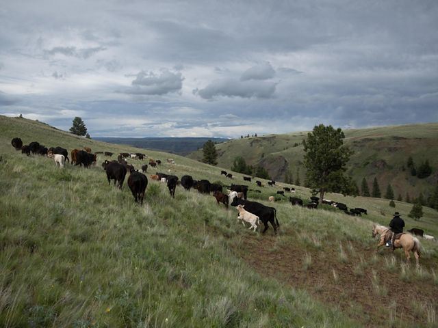 Ranchers at work on the Zumwalt Prairie Preserve in Wallowa County, Oregon.