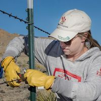 Woman in white ball cap fixes barbed wire fence.