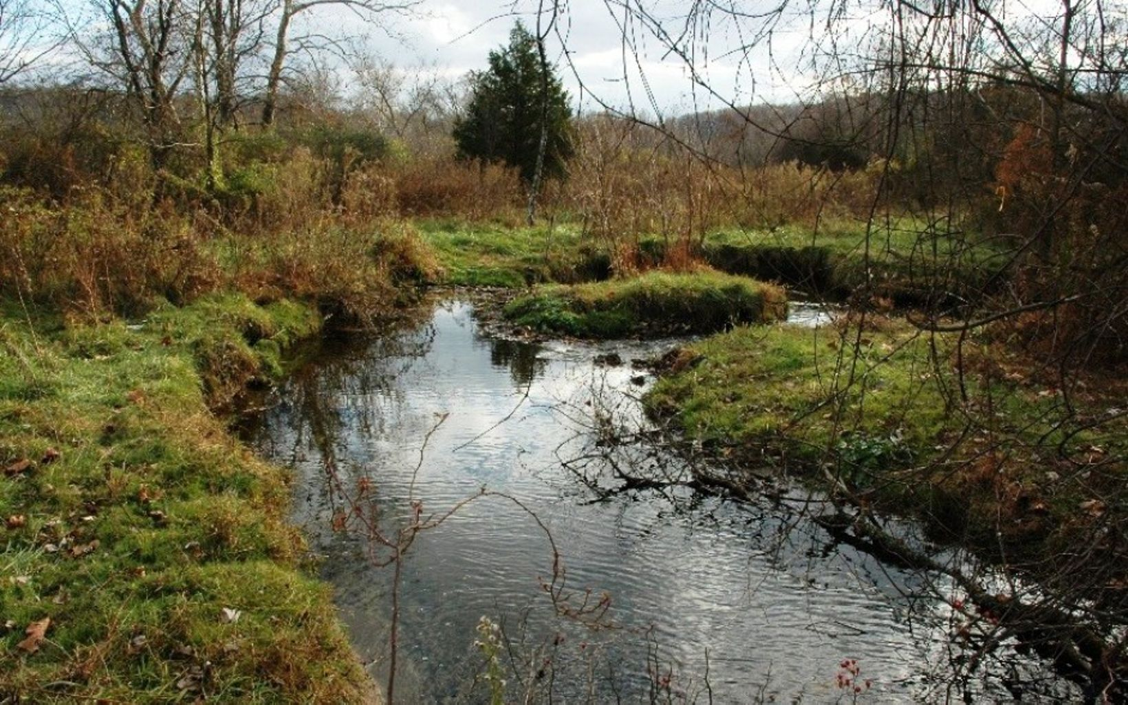 A stream flows through a grassy landscape.