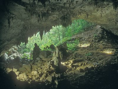 A cave reveals a tropical forest.