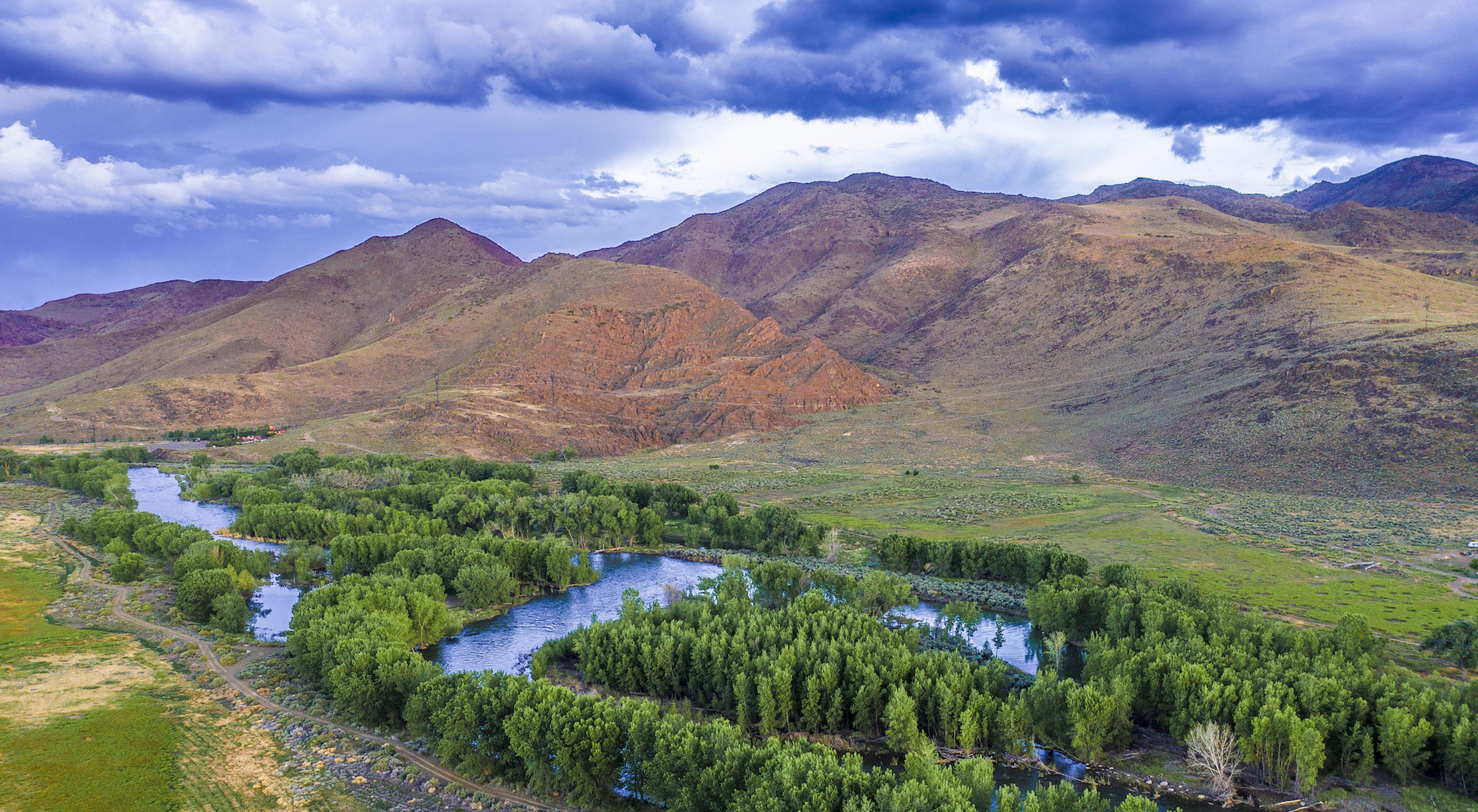 Aerial view of cottonwood forests along the Truckee River