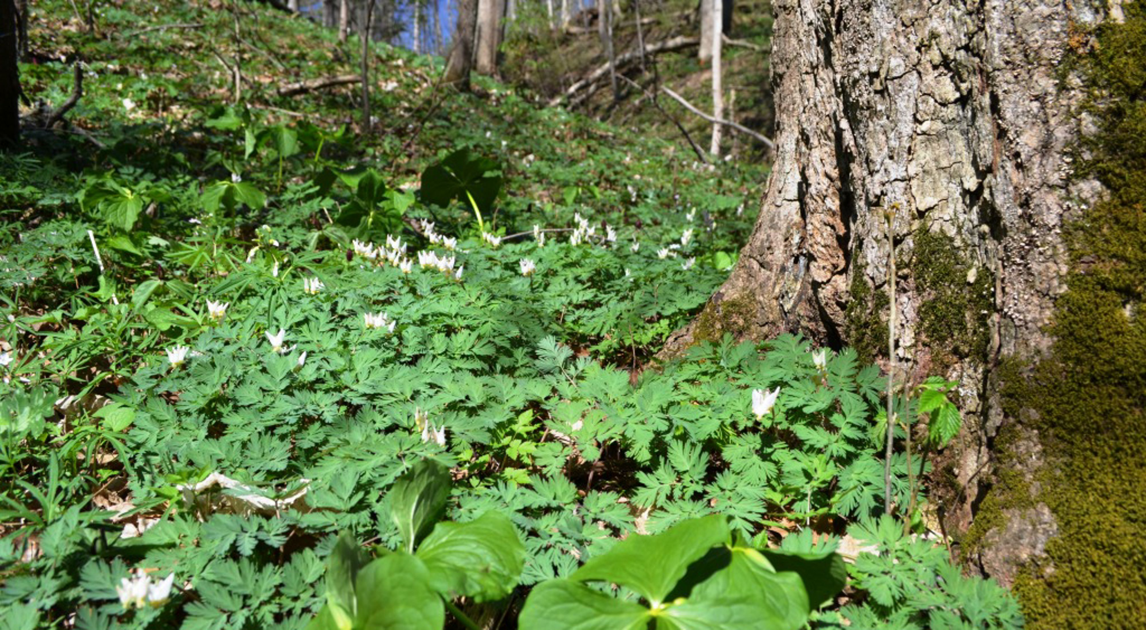 Wildflowers growing at the base of a large tree in a forested area.
